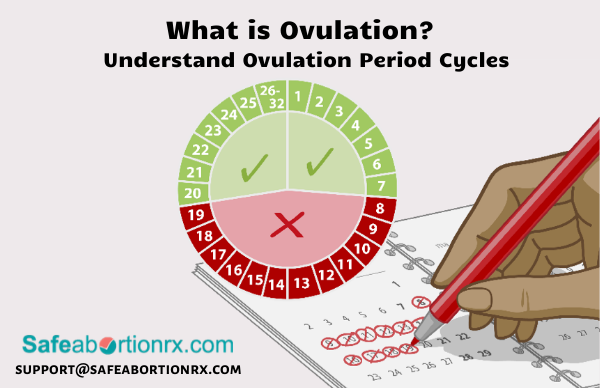 What is Ovulation? Understand Ovulation Period Cycles